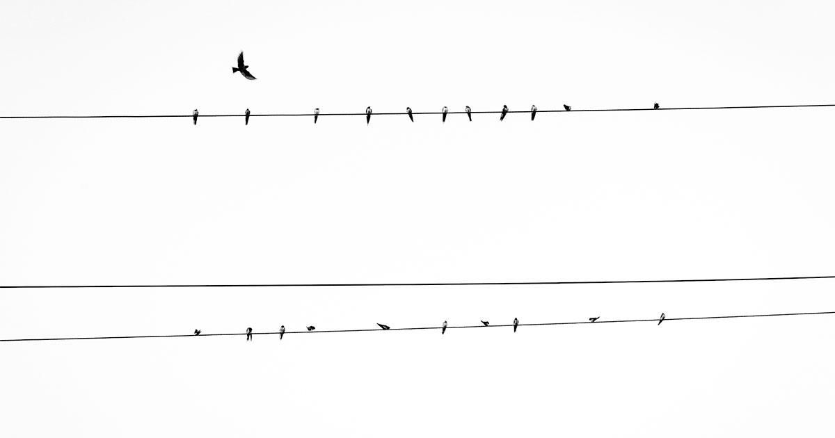 inline-css-birds